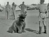 Wojtek the bear ~