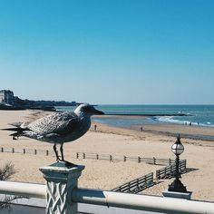 The perfect day to be at the seaside #madaboutmargate even the #seagull is enjoying the sun here with @visitengland and @visitkent #londonigers #postcardsfromtheworld #beautifulbritain #travelblogger #Instatbn #writetotravel
