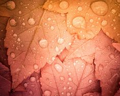 Water drops on autumn leaves, woodland nursery art by Treetop Photo Shop