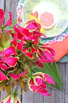 Fuschia Colored Gloriosa Lily