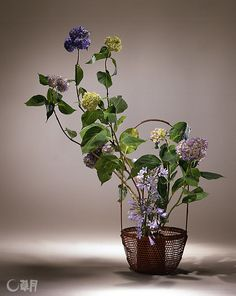 Hydrangea vigorously reaches up out of the airy translucent basket. Their vitality in thrusting upward is emphasized by the expression of the stems.