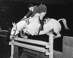 William Steinkraus, Captain of the American Equestrian team and the great Percheron-Thoroughbred cross Bold Minstrel cleared a fence in the international Puissance class during the 1956 National Horse Show at New York's Madison Square Garden. Hunter Jumper, All The Pretty Horses, Beautiful Horses, Show Jumping, Show Horses, Race Horses, Horse Love, Zebras, Horseback Riding