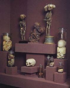 CREEEEEEPPPPYYYY Curiosities for a haunted dollhouse