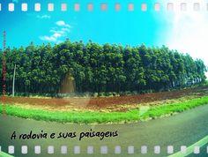 Foz do Iguaçu/PR em setembro 2014