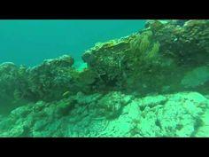 Scuba Florida - Emocean Sports Social Scuba Dive in Key Largo, Florida - http://www.florida-scubadiving.com/florida-scuba-diving/scuba-florida-emocean-sports-social-scuba-dive-in-key-largo-florida/