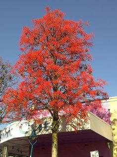 Blackwood Road, Mitchelton Brisbane, Places, Pretty, Lugares