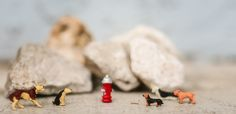 A fire hydrant with rock star status. One Image, Lens, Characters, Fire, Rock, Stars, Photography, Photograph, Figurines