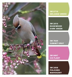 Paint colors from Chip It! by Sherwin-Williams. Photo by Mark Hankoh. ChipCard by Reni Apostolova.