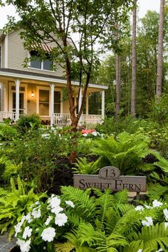 Cottage Charm ~ Ferns ~ Hidden Pond Maine- a fabulous place in Kennebunkport where each cottage has it's own personality and relaxation is the name of the game. Small Gardens, Outdoor Gardens, Garden Art, Garden Design, Garden Plants, Landscape Design, Forest Cottage, Shade Plants, Shade Garden