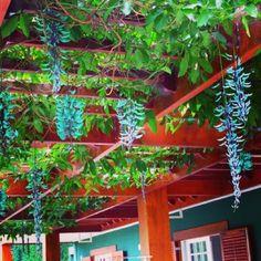 Pergolado com cobertura natural (Jade) - Madeira Massaranduba