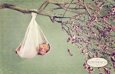 baby in tree - (we all know not to ACTUALLY suspend a baby from a tree branch, right?)