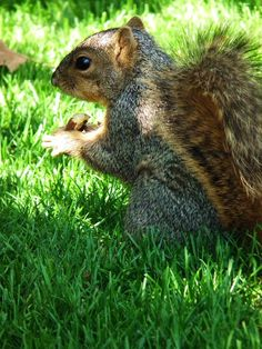 The Squirrel Again! (: By Kristine Euler