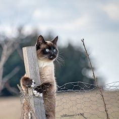 Credit: ( : ) Kalle keeps lookout for spring Funny Cat Memes, Funny Cats, Cat Day, Make You Smile, Cats Of Instagram, Cute Cats, Cat Lovers, Kittens, Pets