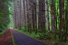 The Banks–Vernonia Rail Trail is 21 miles of paved trail between the two Oregon towns of, what else, Banks and Vernonia