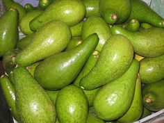 ¡¡¡AGUACATE!!!