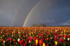 Chase your rainbow, you never know, there could be a pot of hold at the end ;)