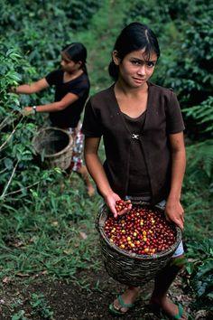 Girl with coffee beans, La Fortuna, Honduras