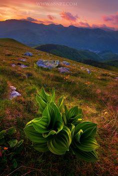 Sunset over Retezat-Godeanu Mountains, Romania (by Zsolt Kiss) Mountain Hiking, Romania, Trekking, Wild Flowers, Fields, Kiss, Mountains, Sunset, Garden