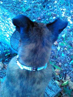 Decorative Dog Collar: $20. Find one like it at http://www.heartandco.co