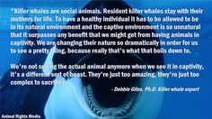 Blackfish- watched jut a little bit of the documentary last night. And I have to say I'm disappointed in sea world  ;(