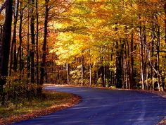 Besides winter, fall's my favorite season. I love all the colors of the leaves.