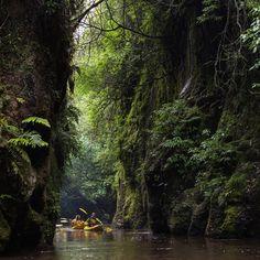 Based in the Waikato just 15 minutes from Cambridge, New Zealand. Kayak Glow Worm Tours on Lake Karapiro. Double Kayak, Darkness Falls, River Trail, Lake District, After Dark, Adventure Awaits, Worms, Christmas Lights, Kayaking