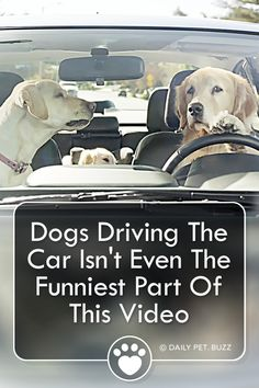This very funny commercial from Subaru has the Barkley's out driving again. This time Mama Barkley is a bit grumpy. Cute Funny Dogs, Funny Ads, Cute Funny Animals, Funny Animal Videos, Animal Memes, Animal Video Youtube, Cute Pupies, Driving Humor, Puppy Barking