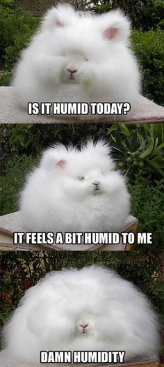 Hair problems  http://www.lolmodeon.com, thought this was cute:)