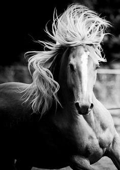 Böyle bir atı olmalı insanın