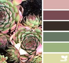 succulent hues color combination, color palettes, color scheme, color inspiration, visual communication.