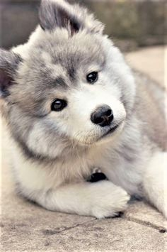 #cutest #dog #sweet #lovely ✧ ☾ @ Sky Paradise @ ☾✧