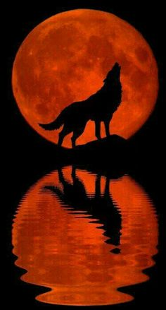 Super Tattoo Animal Wolf The Moon Ideas - Super Tattoo Animal Wolf The Mo . - Super Tattoo Animal Wolf The Moon Ideas – Super Tattoo Animal Wolf The Moon Ideas – - Wolf Tattoos, Animal Tattoos, Artwork Lobo, Wolf Artwork, Wolf Love, Beautiful Wolves, Beautiful Moon, Tier Wolf, Wolf Painting