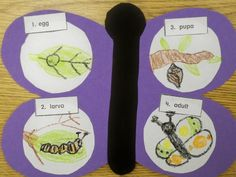 Here's a terrific idea for representing the life cycle of a butterfly.