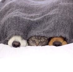 Dog Knows Exactly How To Ease His Adopted Siblings' Anxieties - Watson , Kiko & Harry Animals And Pets, Baby Animals, Funny Animals, Cute Animals, Dog Anxiety, Raining Cats And Dogs, Tier Fotos, Mundo Animal, Cat Memes