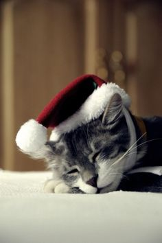 The holidays make me tired