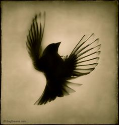 sparrow tattoo silhouette - Google Search