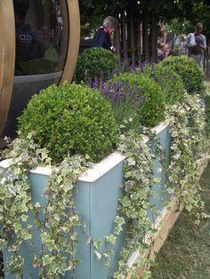 Box + Ivy + Lavender