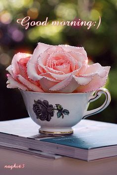 Sparkling Pink Rose In A Cup ....Good Morning