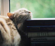 Mmm... Books... #literarycat