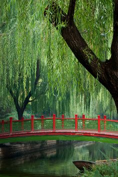 Peaceful Weeping Willow