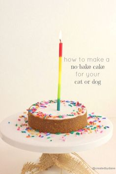 How to make a no-bake cake for you cat or dog