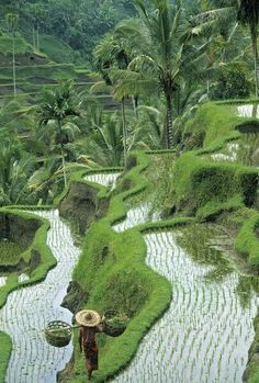 """""""Planet Earth: Rice fields, central Bali, Indonesia. (Photo: Peter Adams) """" Niels Kater"""