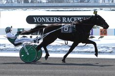 Daniel Dube....MY DAD LOVED HORSE RACING....WE LIVED CLOSE TO YONKERS RACEWAY...