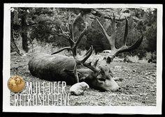 Image from B&C's A Mule Deer… Hunting Pictures, Deer Pictures, Big Game Hunting, Hunting Stuff, Great Photos, Old Photos, Alaska, Mule Deer Hunting, Big Deer