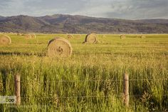 Hay Field by swhite. Please Like http://fb.me/go4photos and Follow @go4fotos Thank You. :-)