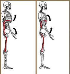If an athlete is to have a strong, pain free overhead position, the shoulder blade and the upper back must have a healthy relationship. Like any beautiful couple, if there is disharmony, then problems will arise. The focus of this article will be working to attain full shoulder elevation with a desirable spinal position and …