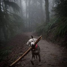 Forest Park, Portland, Oregon. Photo by @robybabcock #TourThePlanet