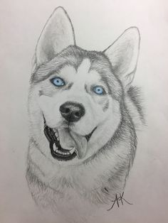 Siberian husky drawing, King with blue eyes