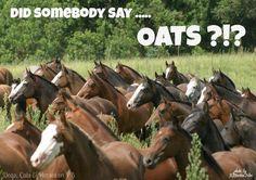 Did somebody say…OATS?!? #horses