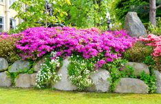 Fuschia flowers in elevated rock garden surrounded by greenery in front yard of home.